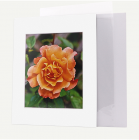 11x14 Pre-cut Mat with Whitecore fits 8x10 Picture + Backing + Bag