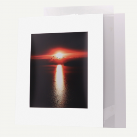 Pack of 25, 16x20 Pre-cut Mat with Whitecore fits 11x14 Picture + Backing + Bags.