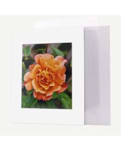 Pack of 50, 11x14 Pre-cut Mat with Whitecore fits 8x10 Picture + White Foam Board + Bags.